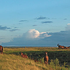 "photo ""Red horses"""