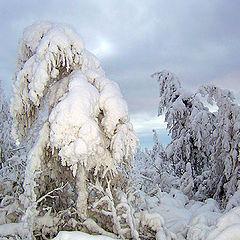 """фото """"Царство Зимы"""""""