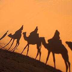 "фото ""Desert shadows"""