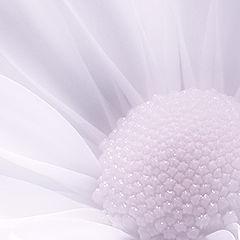 "фотоальбом ""Flowers"""