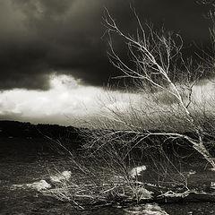 "фото ""winter storm"""