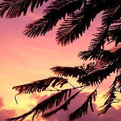 "photo ""Tropical Sunset"""