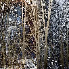 "фото ""When Winter Stays"""