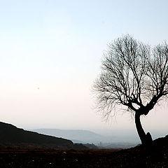 "photo ""single tree"""