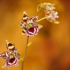 """фото """"Цветок, олицетворяющий любовь"""""""