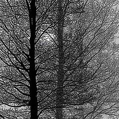"""фото """"Winter Afternoon"""""""