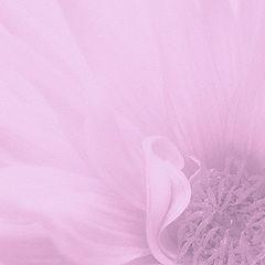 "фото ""Lilac"""