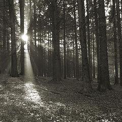 """фото """"Sun beams"""""""