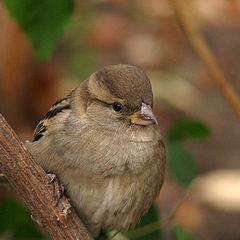 """фото """"Birdie"""""""