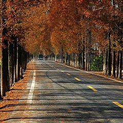 "фото ""Road at countryside"""