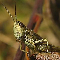 "album ""Grasshoppers"""