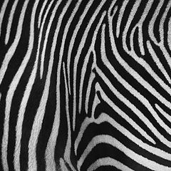 """фото """"Zebra's Back"""""""
