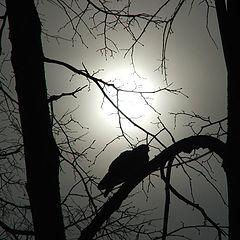 "фото ""Sun at foggy winter day"""