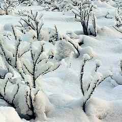 "фото ""...winter story..."""