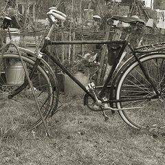 """фото """"The bike"""""""