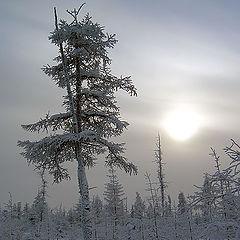 "фото ""Холодное солнце Севера"""