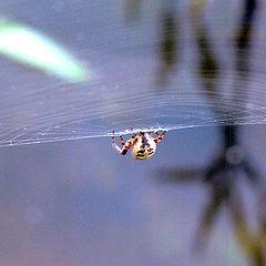 "фото ""паук"""