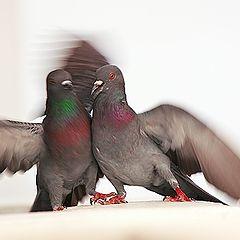 "фото ""Fight..."""