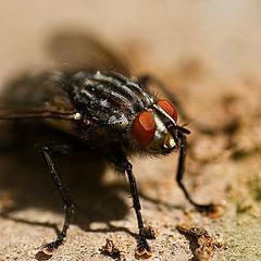 "photo ""A Fly"""