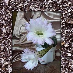 """фото """"Цветущий кактус."""""""