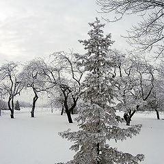 """фото """"Ёлочка зимой"""""""
