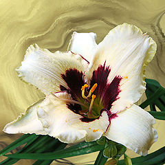 """photo """"Day-Lily"""""""
