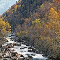 """photo """"The mountain river in paints of a mellow autumn"""""""