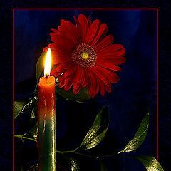 """фото """"Пусть в эту ночь цветут цветы и тихо плачут свечи…"""""""