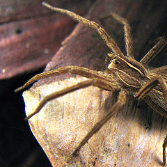 """фото """"Little spider"""""""