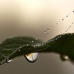 """фото """"Одна дождинка еще не дождь"""""""