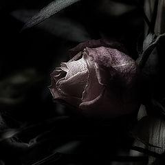 """фото """"Send Me Dead Flowers"""""""