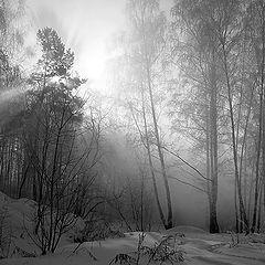 """фото """"В зимнем лесу."""""""