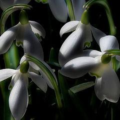 """фото """"Весна в Москве"""""""