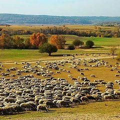 "фото ""grassland"""