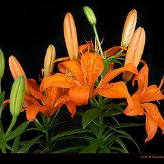 "photo ""Flaming Bouquet"""