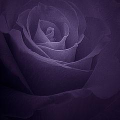 "фото ""Purple for Paul"""