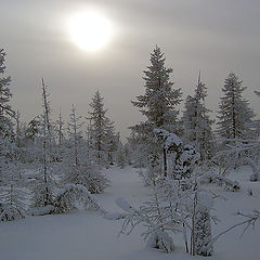 "фото ""Холодное солнце Севера 2"""