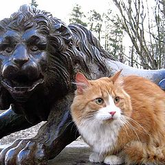 """фото """"Кошачий  телохранитель."""""""