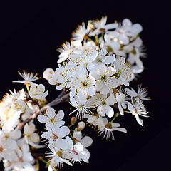 """фото """"весна настала, можно жить!"""""""