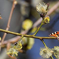 "фото ""Нектар ранней весны"""