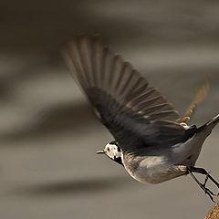 """фотоальбом """"Birds"""""""