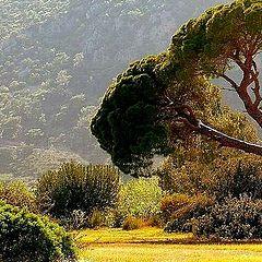 """фото """"Nature"""""""