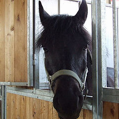 "photo ""Horse"""