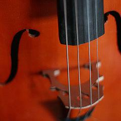 """фото """"Cello"""""""