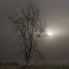 """фото """"Лунная ночь. Подражая Куинджи."""""""
