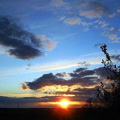 "фото ""Куст, солнце, небеса..."""