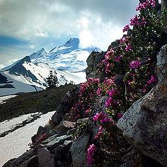 """фото """"Цветы и прошлогодний снег"""""""