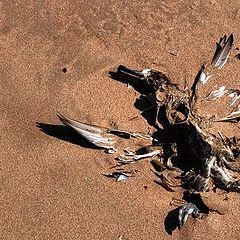 """фото """"... Dead Duck ..."""""""