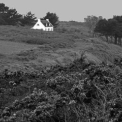 """фото """"White house in the moor"""""""