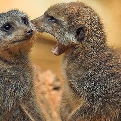 "photo ""Fresh gossip"""